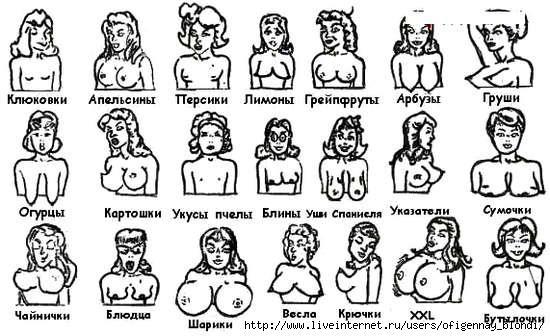 Формы женской груди.  Фото